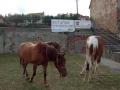 Den první - Koně